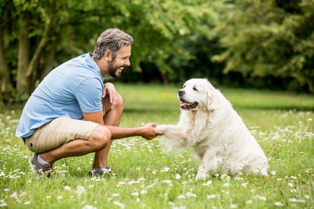 Comment apprendre à un chien à marcher au pied sans laisse?